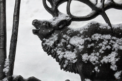 #snow #dusting on #elk that was on a #bench in #telluride #colorado #photooftheday #day21