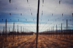 It has been suggested by several people actually that I post a less graphic #photooftheday than yesterday's. :-). So here you go. The #hops farm outside of #montrose #colorado #day53